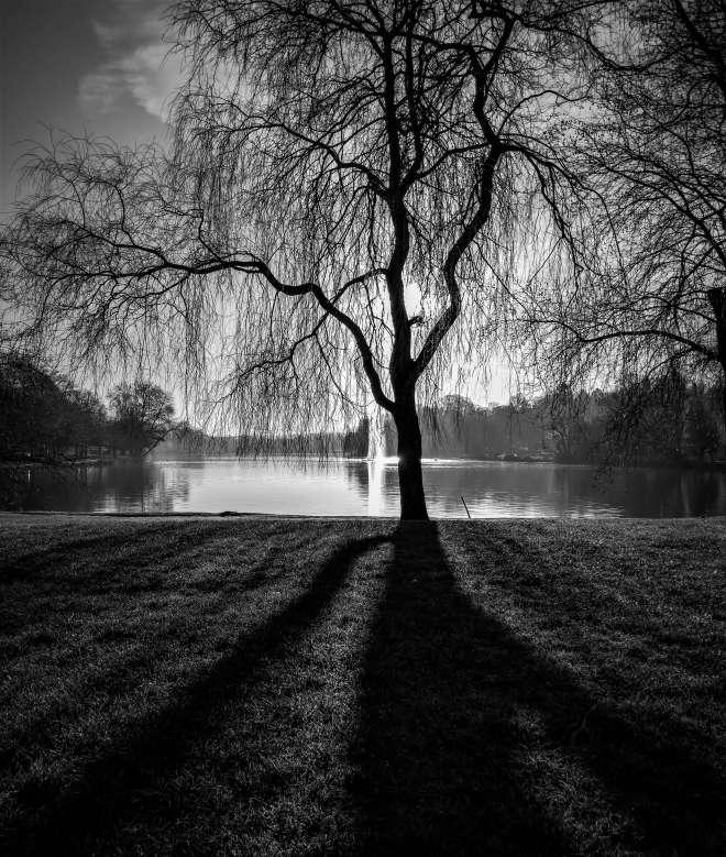 Lac de Genval 2.2019 © Frederic Peetroons3