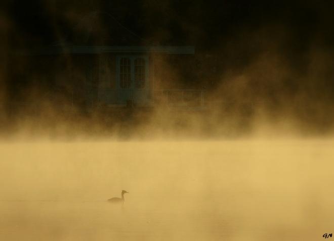 Lac de Genval 4.2013 © Gilbert Nauwelaers - 08