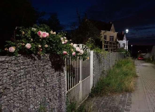 818 Sentier des Rossignols B 8.2019 © Eric de Séjournet 1