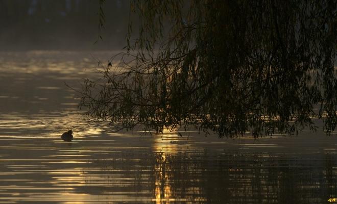Lac de Genval 11.2014 C © Gilbert Nauwelaers - 2