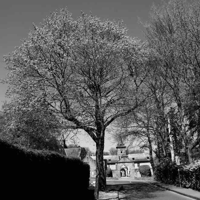 Drève du Château Rixensart 4.2019 © Eric de Séjournet