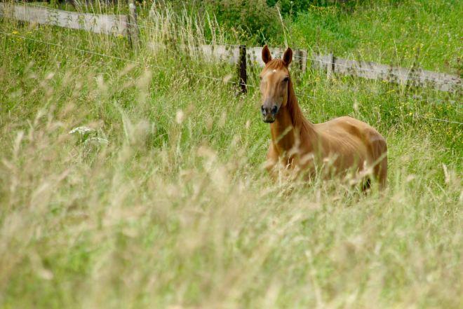Carpu cheval © Eric de Séjournet